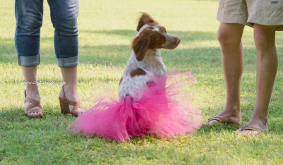 Doggie 1st birthday-13