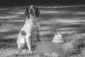 Doggie 1st birthday-2