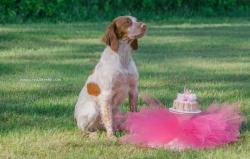 Doggie 1st birthday-3