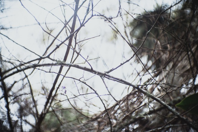 Magnolia in springtime-12