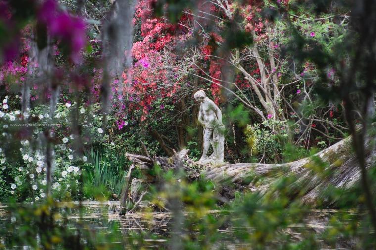 Magnolia in springtime-20