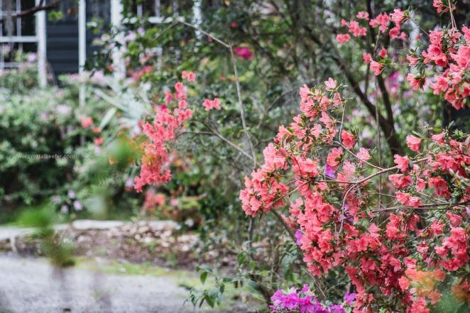 Magnolia in springtime-24