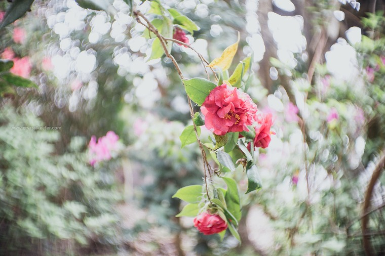 Magnolia in springtime-26