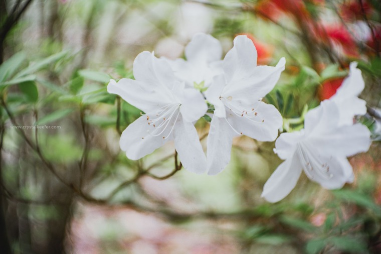 Magnolia in springtime-30