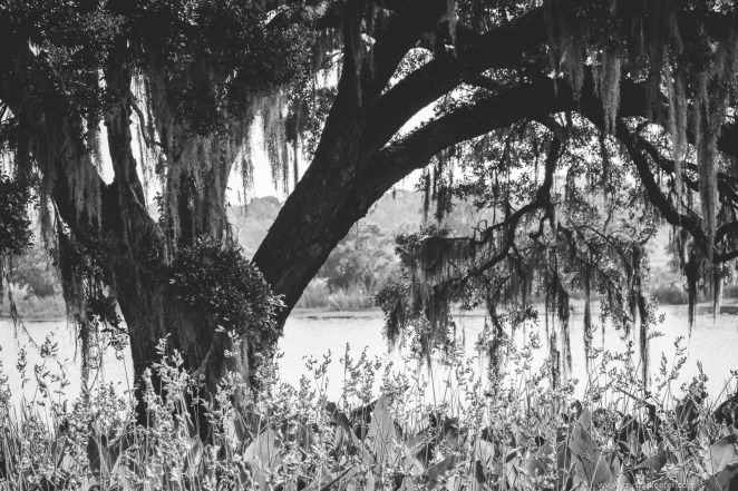 Middleton Place-30